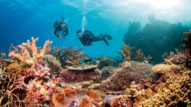 Que faut-il savoir sur la grande Barrière de Corail