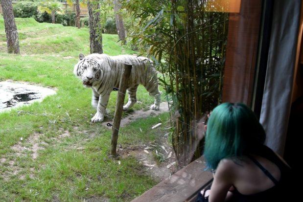 Zoo de la Flèche : Une nuit à dormir au milieu des animaux !